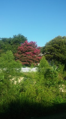 Richardson, Τέξας: Crepe Myrtle in backyard of home adjoining the park.