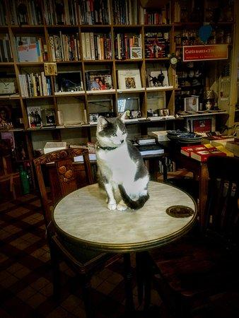 La Perriere, França: Charles, le chat de la librairie