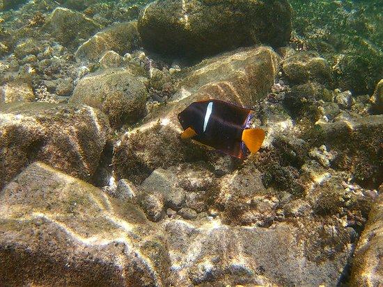 Fun Baja: Snorkel with fish