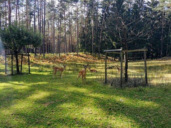 Pegnitz, Tyskland: Wildgehege Hufeisen (Veldensteiner Forst)