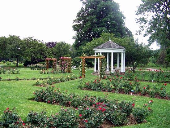 Allentown Rose Gardens: Rose Garden mid-summer