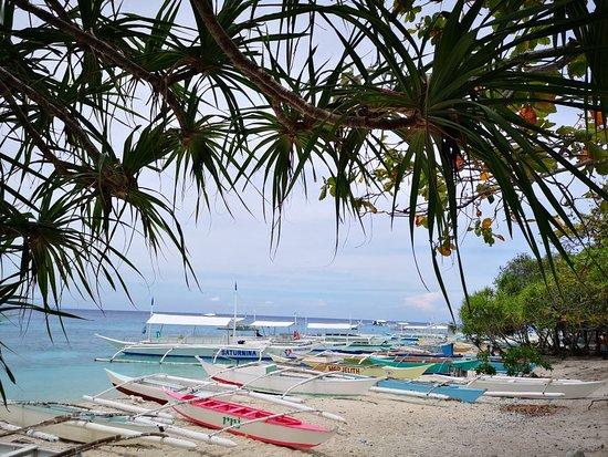 Balicasag Island, Philippinen: IMG_20180701_122908_large.jpg