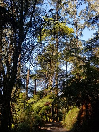 Sherbrooke, ออสเตรเลีย: 20180826_110104_large.jpg