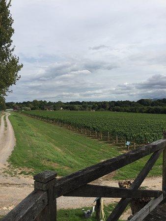Nutbourne ภาพถ่าย