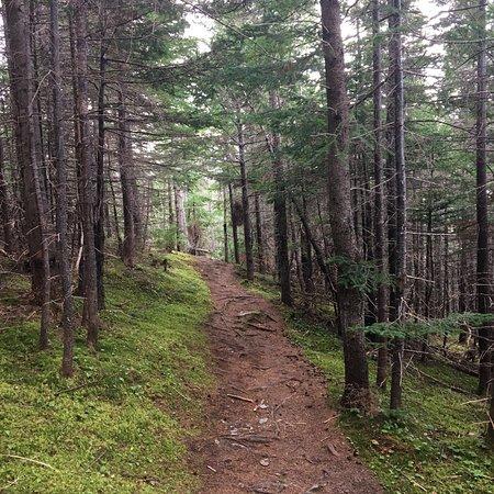 Burnt Hill Hiking Trail: photo4.jpg