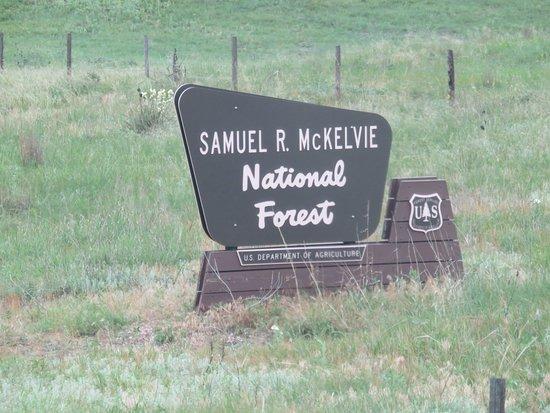 Nenzel, เนบราสก้า: McKelvie National Forest