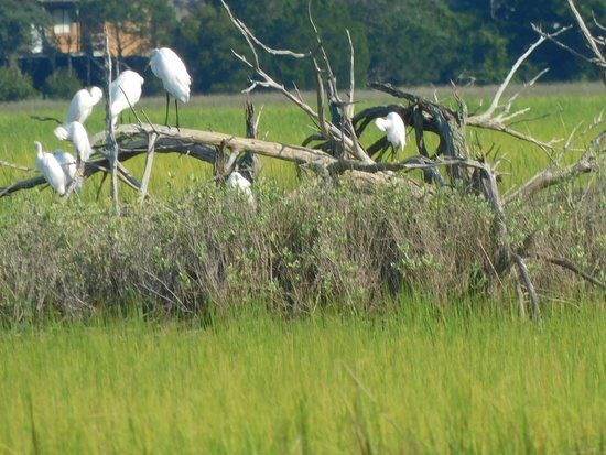 Holden Beach, Северная Каролина: Egrets near Oak Island