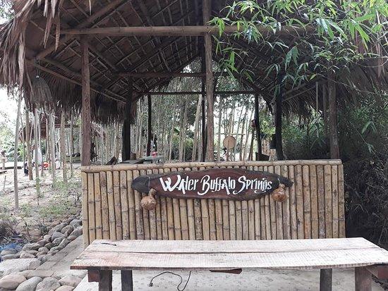 Dong Hoi, Vietnam: water buffalo springs