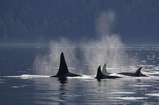 Whale-Watching Cruise from Victoria and Butchart Gardens Admission
