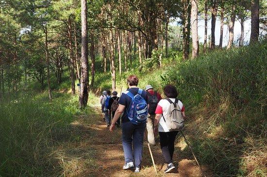 Opium Trail Trek Including Wat Phra...