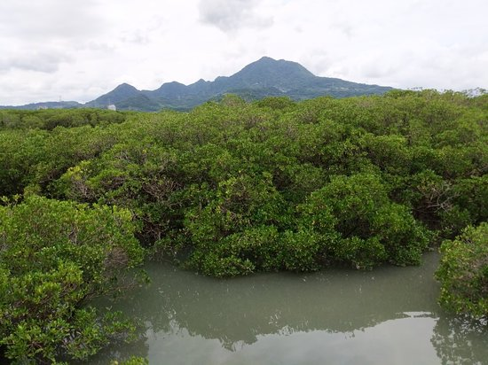 Mangrove Ecological Park