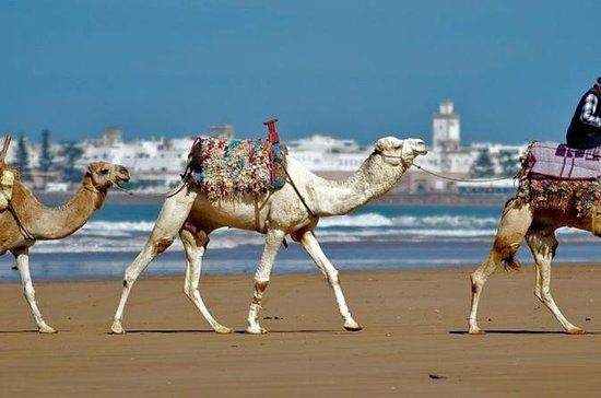 Essaouira: Small-Group Guided Day...