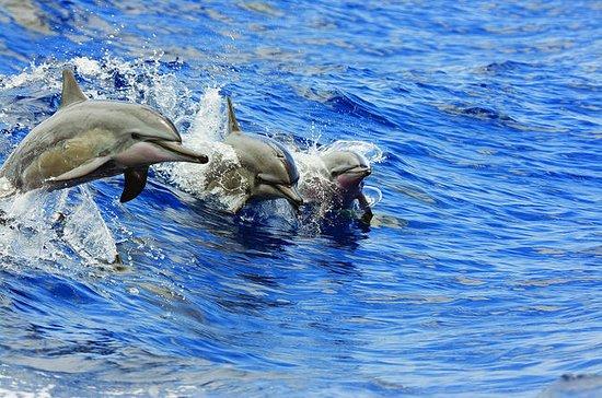 イルカやカメの保障、カタマラン朝または午後のシュノーケル&ランチ