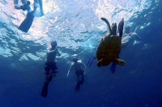 Sunset Plankton Eco Snorkel Tour fra...