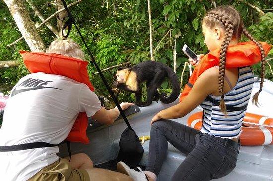 Tour en el Canal de Panamá y Monkey...