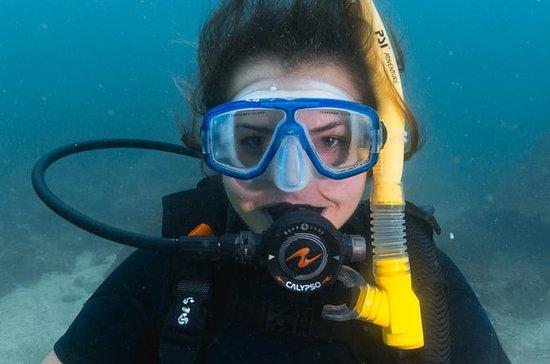 PADI Discover Scuba Diving da Ilha...