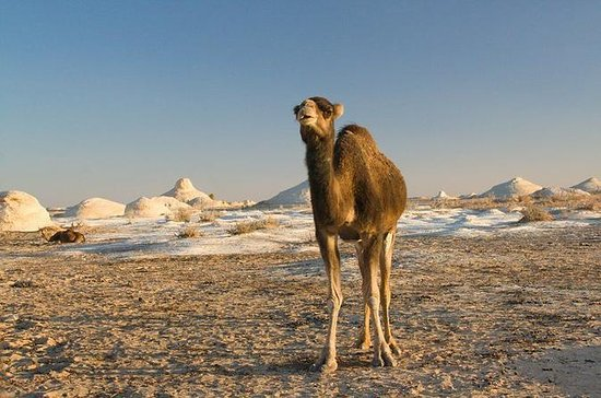 Camel Ridding marsa alam safari from...