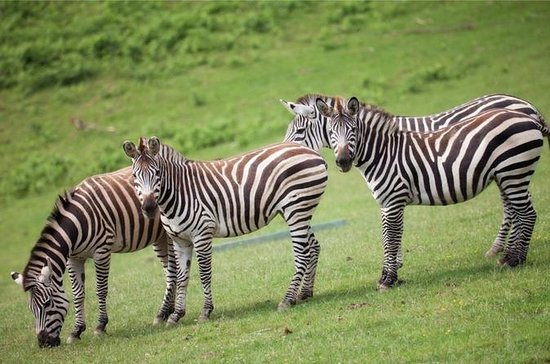 Zoo du Bois d'Attilly Salte la línea Prueba de entrada de boleto