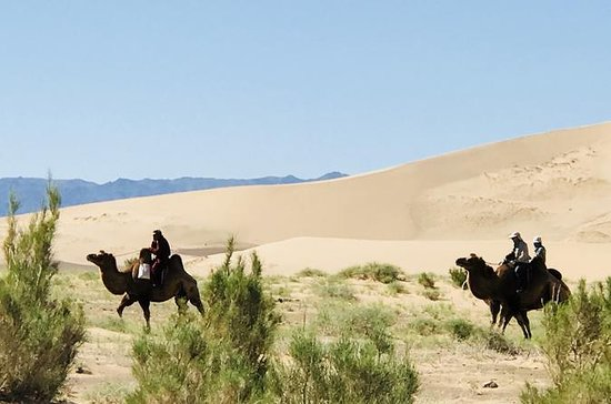 Camel Trek en el desierto de Gobi