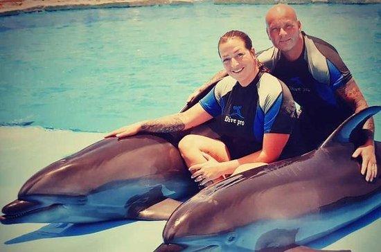 Tour de natation avec les dauphins...