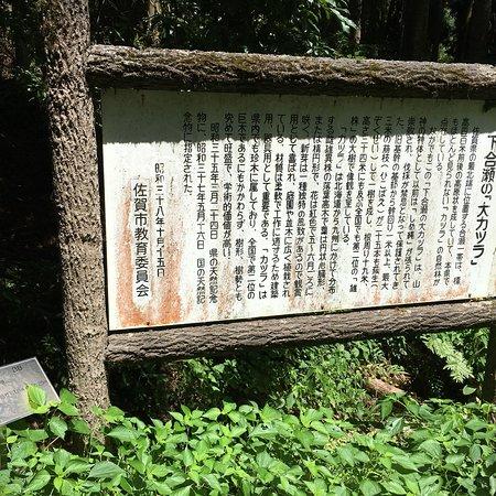 Shimoose no Daikatsura