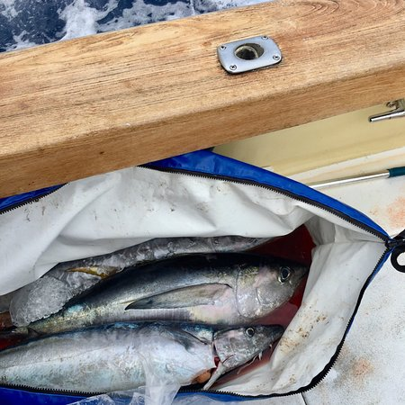 Humdinger Sportfishing 사진