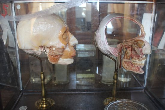 Museum of Human Anatomy