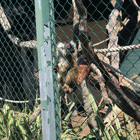 Jardin Zoologique Tropical La Londe Les Maures 2019 All You Need