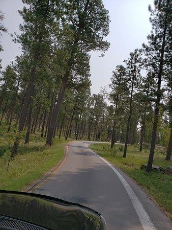 iron mountain road split picture of iron mountain road custer