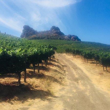 11 Top Sonoma Vineyard Hikes – Best Wine Country ... |Hiking Wine