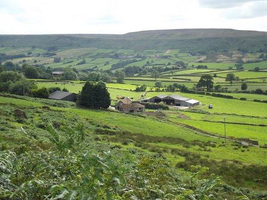 Rowantree Farm B&B