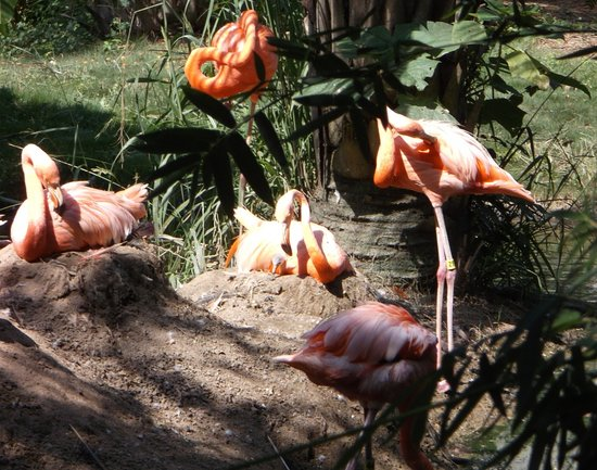 Riverbanks Zoo and Botanical Garden 사진