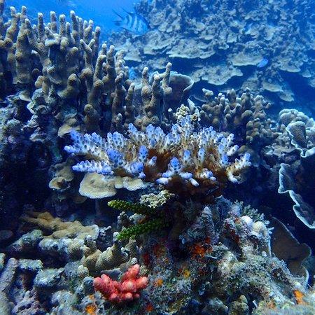 Con Son, Vietnam: Dive dive nice