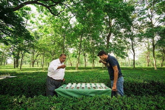Palampur, อินเดีย: Tea Tasting with the professionals