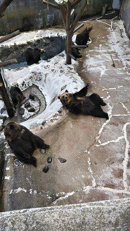 Noboribetsu Bear Park: 熊です