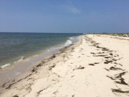 Reedville, VA: Beach on Tangier