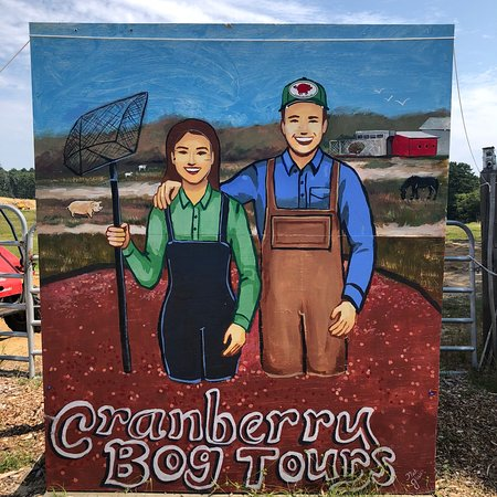 Cranberry Bog Tours: photo0.jpg