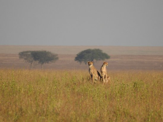 5 Days Tanzania safari: two lovely males keeping an eye out on their surroundings