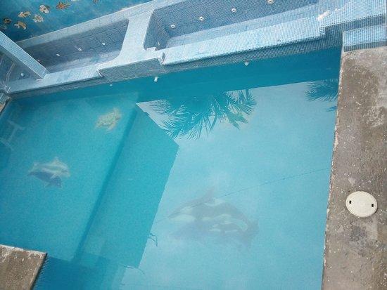 Cuyutlan, Mexico: Alberca oasis