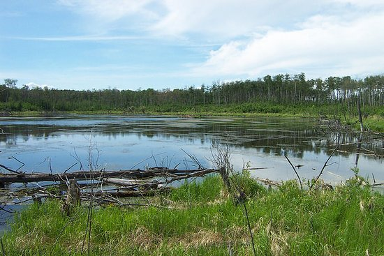 Parkland Natural Area
