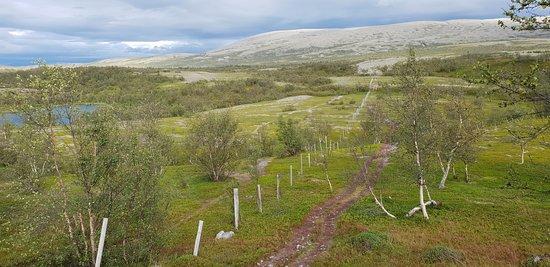 Lakselv, Norway: Stabbursdalen nasjonalpark