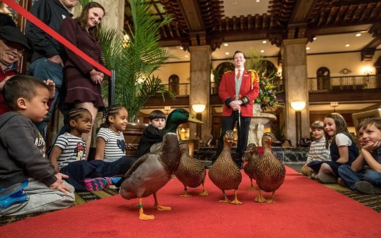 ‪The Peabody Ducks‬