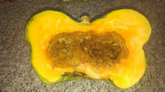 Medowie, Australie : Rotten pumpkin from the market!!!