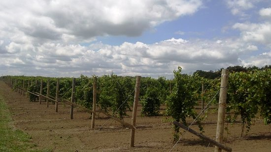 Bryan, OH: 13-are vineyard
