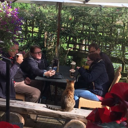 Drumbeg, UK: The Secret Tea Garden @ Assynt Aromas