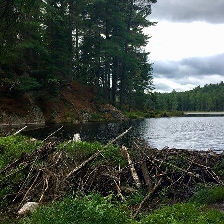 Beaver Pond Trail: photo1.jpg