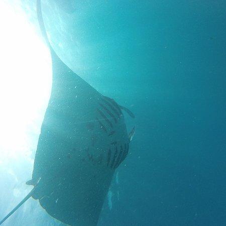 The King of The Sea Trip: Big manta
