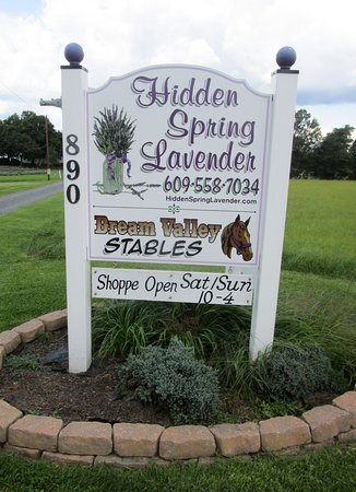 Skillman, NJ: Hidden Spring Lavender Farm