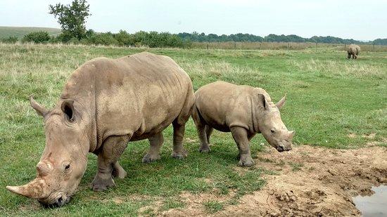Cumberland, Οχάιο: Rhino & Baby