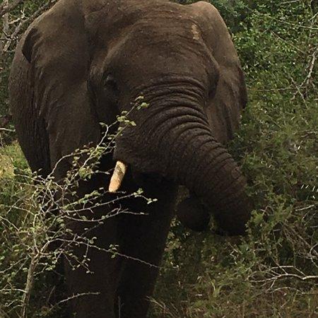 Empangeni, Sydafrika: photo2.jpg